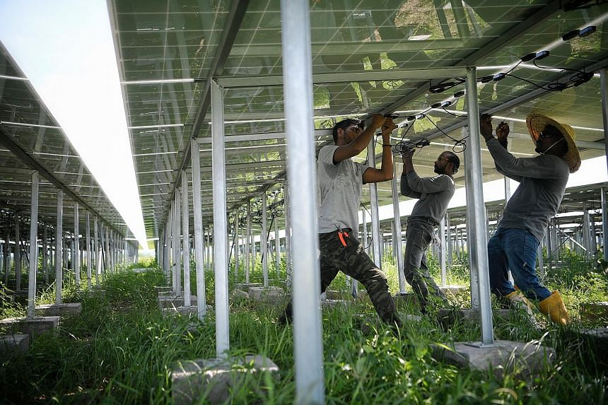 Workers adjusting solar panels at the Renewable Energy Integration Demonstrator-Singapore developed by Nanyang Technological University, in May.