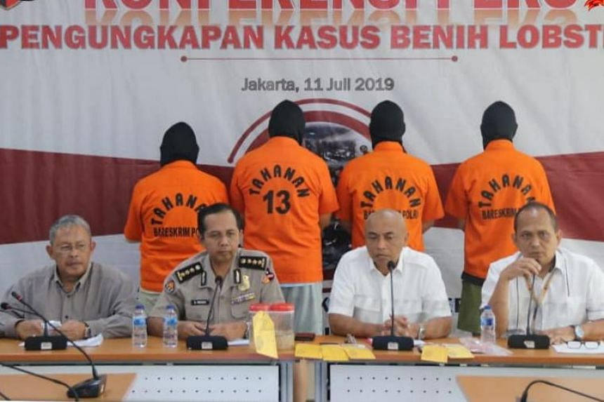 Members of the Indonesian Police address media after thwarting an attempt at smuggling lobster larvae, with the four suspected smugglers (in orange), at a press conference on July 11, 2019.