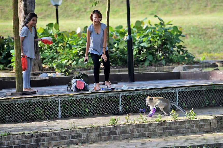 A macaque stealing a bottle at MacRitchie Reservoir. When it comes to creatures that can sting, bite or create mischief, people prefer that the animals are moved away from their living space rather than be left alone, a joint survey by two universiti