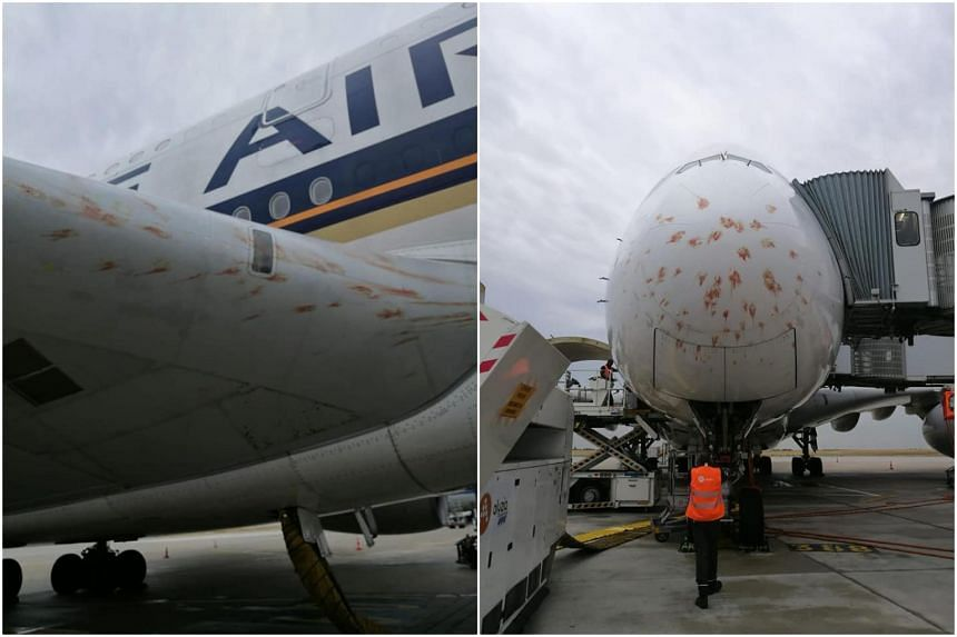 SIA plane delayed after it strikes several birds while landing in