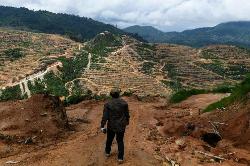 Plantations operating in both the Malaysian and Indonesian parts of Borneo have come under scrutiny over logging activities, the clearing of forests, fires and labour abuses.