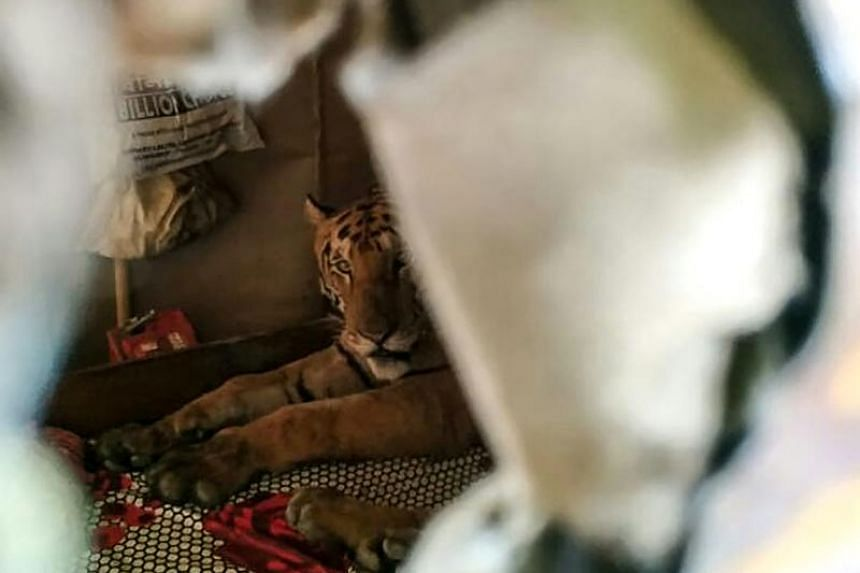 More than 50 wild animals have died so far, including some in traffic accidents, as they tried to cross a busy highway outside the park and reach the nearby Karbi hills, local media reported.