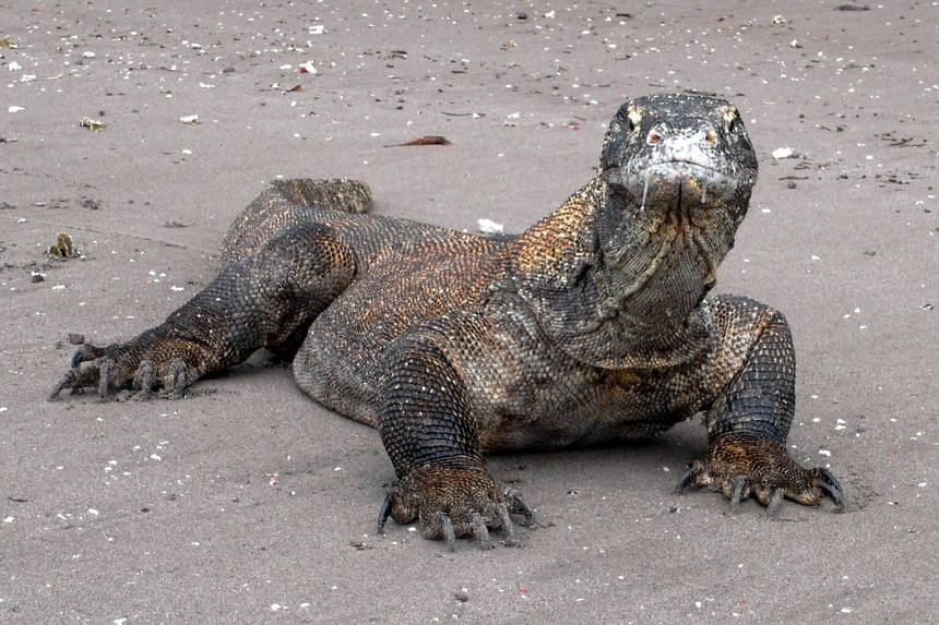 Indonesia's Komodo Island is also a natural habitat of the dragon and is included in the Komodo National Park.