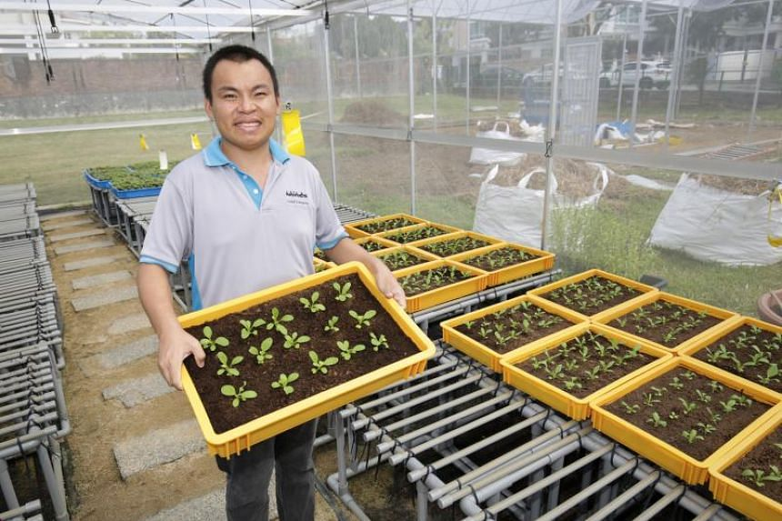 Mr Ang Kian Chuan, 22, one of 14 beneficiaries involved in farming activities at the Movement for the Intellectually Disabled of Singapore (Minds) Idea-Employment Development Centre in Rosyth Road.