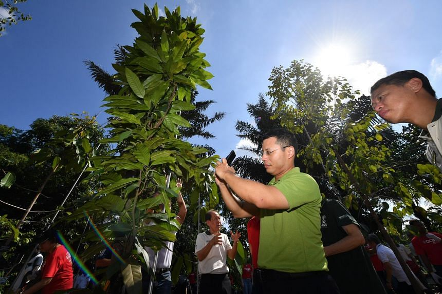Mr Desmond Lee, Minister for Social and Family Development & Second Minister for National Development, taking a photograph of the Shorea gratissima (Meranti Laut) he planted.