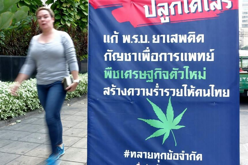 A Bhumjaithai Party election poster advocating for the more relaxed regulations that would turn marijuana into Thailand's next cash crop, in Bangkok in March 2019.