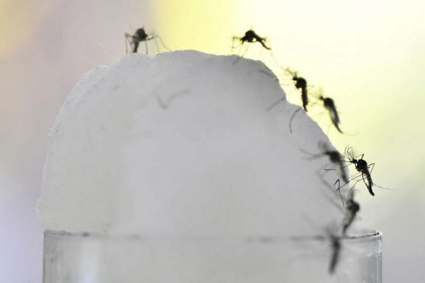The enforcement actions this year come amid a spike in dengue cases, with home owners facing a fine of at least $200 if they are found to be breeding mosquitoes.