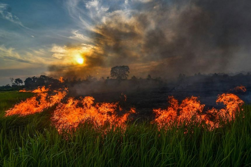 A fire goes off in a palm oil plantation in Pekanbaru, in Riau province, on July 20, 2019.