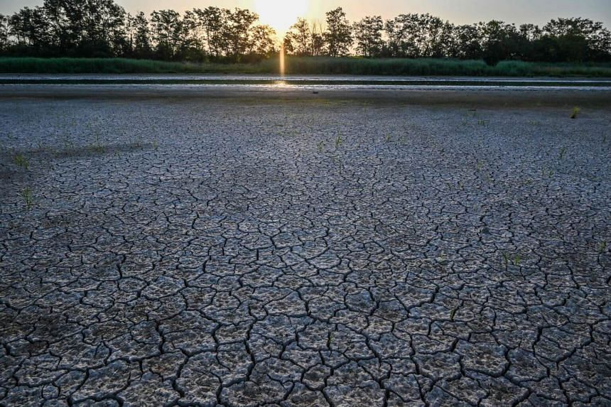 The dried out bank of a pond in the Dombes region in Villars-les-Dombes, France, on July 24, 2019.