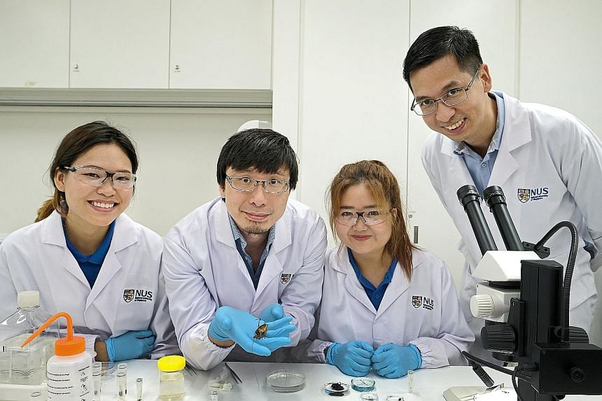 Members of the Mandai Insect Survey (from left): Ms Nikki Chin, Dr Ang Yuchen, Ms Joycelyn Tan and Dr Hwang Wei Song. Dr Ang is holding a katydid, a relative of the grasshopper. PHOTO: LIANHE ZAOBAO