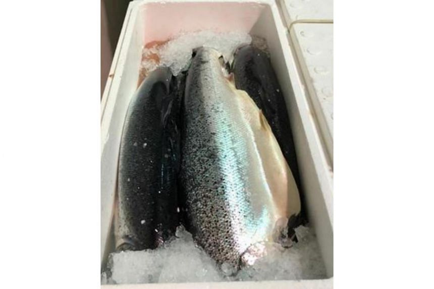 Importer Yu Fish was informed by its supplier in Norway that a sample of fresh Atlantic salmon from a lot produced on July 25, 2019, was detected with listeria monocytogenes.