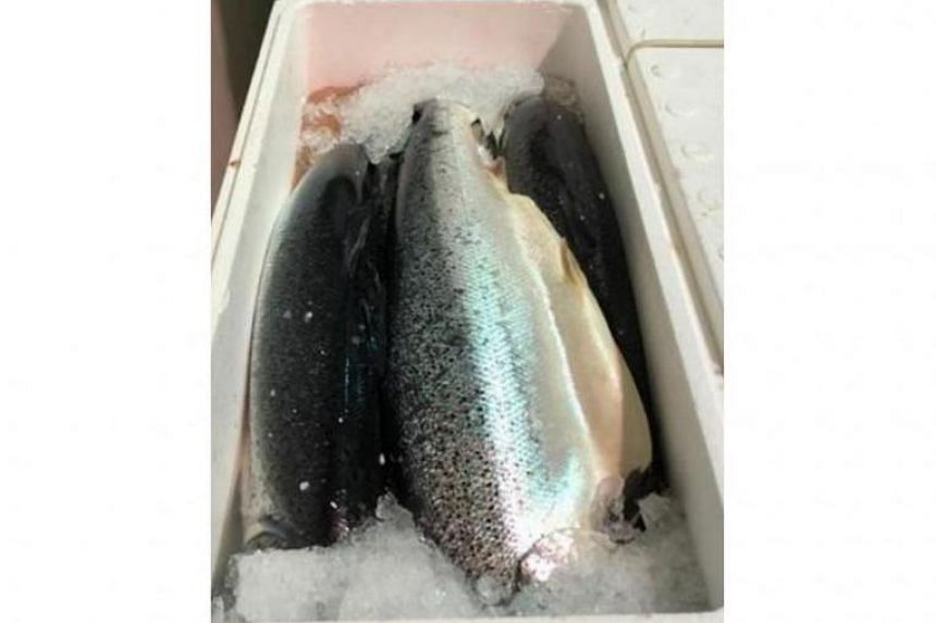 The Singapore Food Agency issued the recall on July 31, 2019, to Yu Fish after it found the bacteria in a sample of its fresh Atlantic salmon.