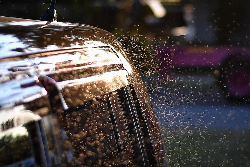 Above: Midges near a parked car at Pandan Reservoir yesterday. Left: PUB is carrying out fogging twice daily around the reservoir dyke, drains and surrounding vegetation in the mornings and evenings. The amenities centre there will also be partially