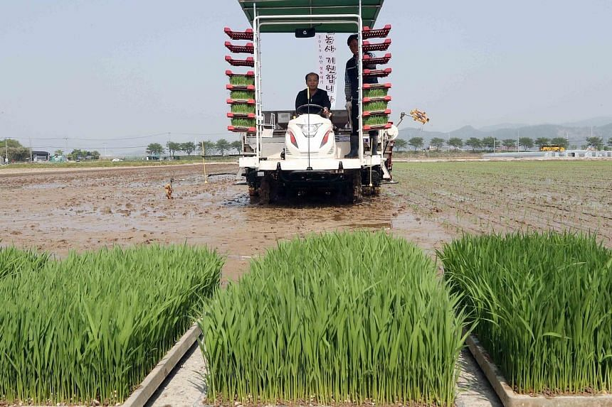 Rice-planting in South Korea. The US move against WTO rules may damage South Korea's farm sector, in which it enjoys privileges as a developing country. Under the status, the country is allowed to impose duties of up to 513 per cent on imported rice