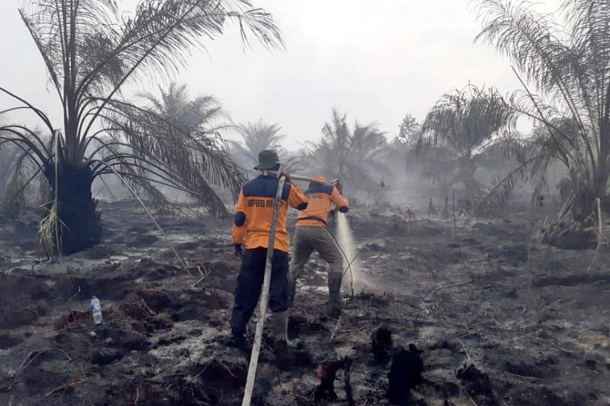 More than 5,000 personnel, including reinforcement from the military and police, have been deployed to Riau to help curb the spread of plantation and forest fires.
