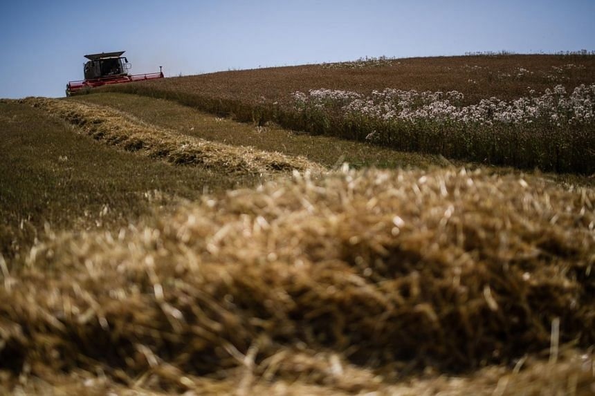 In a file picture taken on July 25, a harvester works on a field of winter wheat at the ecological village of Brodowin, Germany.