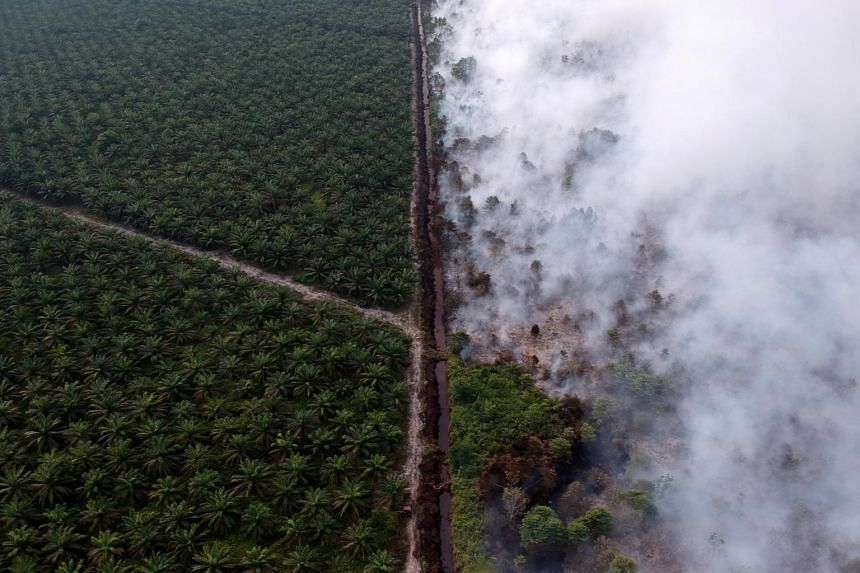 An aerial view of a forest fire next to an oil palm plantation at the Kumpeh Ulu district in Muarojambi, Indonesia, on July 30, 2019.