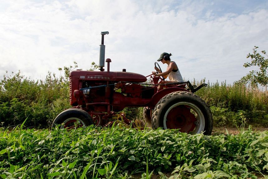 Farmer Isabel Milligan weeds and transplants crops with a tractor in Amagansett, New York.