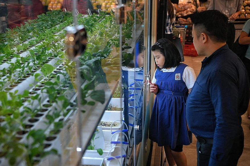 The new store features a small indoor hydroponic farm - where vegetables are grown and harvested - by local urban farming firm ComCrop.