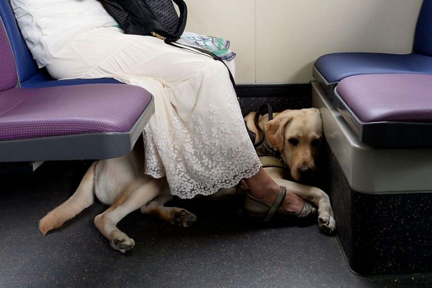 A woman with her guide dog on a public bus.
