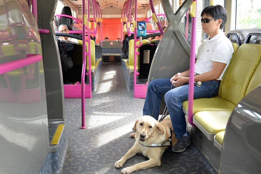 In this picture taken on June 23, 2013, guide dog Seretta sits on a bus with its visually handicapped owner.