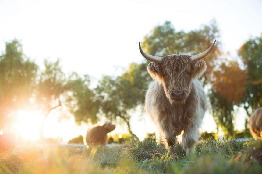 The Biggest Little Farm follows a California couple who set out to run a small, sustainable, biodynamic farm just outside of Los Angeles.