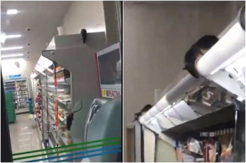 "Video clips posted on YouTube and Twitter appeared to show at least six of the long-tailed rodents, with some descending from refrigerated display racks stocked with ""onigiri"" rice balls and bento meals before scampering down an aisle."