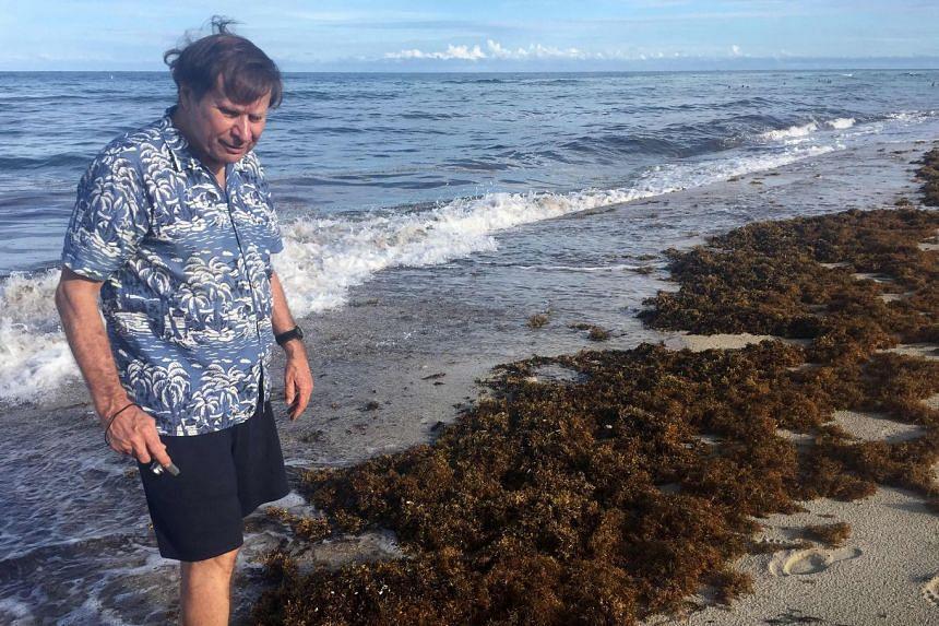 """""""Dr Beach"""" Steve Leatherman amid the sargassum on Miami Beach in Florida."""