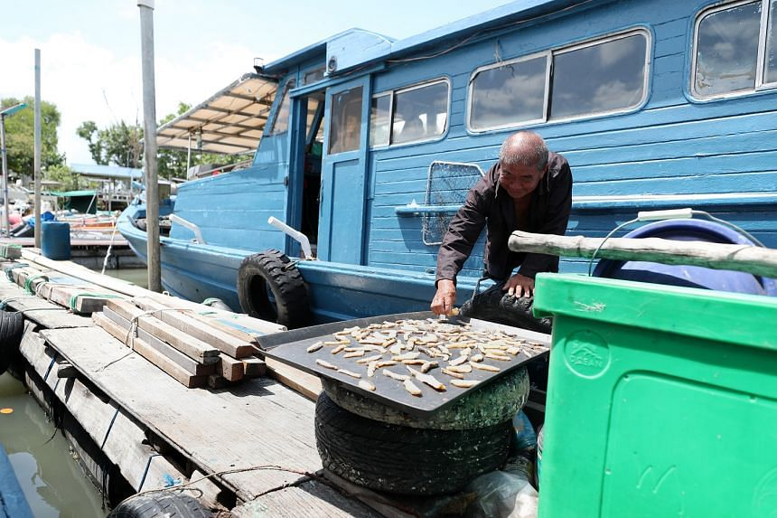 Mr Tan drying salted fish from the stash given to him by fishing enthusiasts who charter his boat. He will give the dried salted fish to friends and family.