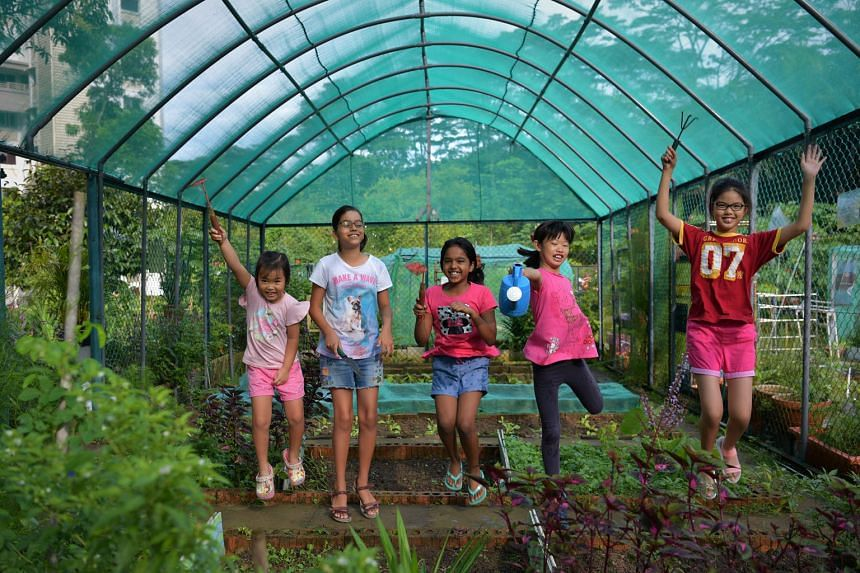 The garden sits between Maju forest and Block 118 Clementi Street 13. (From far left) Chen Xinping, five; Anna Manipur, 10; Meera Sathappan, 11; Estella Bang, 10; and Shen Xi Ran, 11, at the Sunset Way Kids' Garden. They are part of a group of 16 chi