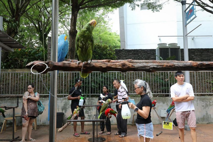 Ms Grace Lee, 31, a pet groomer, takes her amazon parrots to the bird corner in modified backpack carriers designed for small animals such as cats. A perch is adapted into the carrier for the parrots to stand on. Parrot owners gather every Sunday at