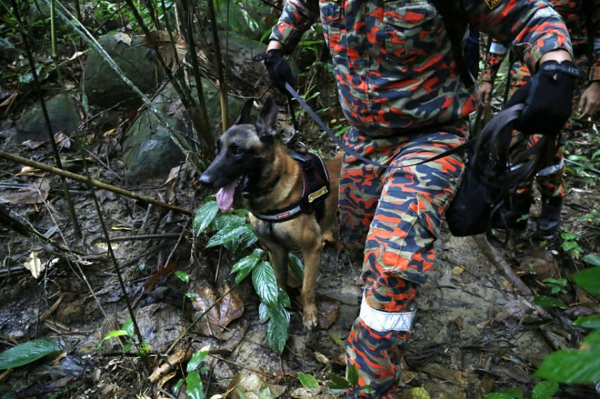 A member of a rescue team using a sniffer dog to conduct a search for missing British girl Nora Anne Quoirin in a forest in Seremban, Malaysia, on Aug 10, 2019.