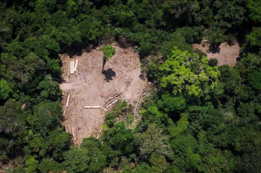 An illegal felling area in the Amazon forest on Oct 13, 2014.