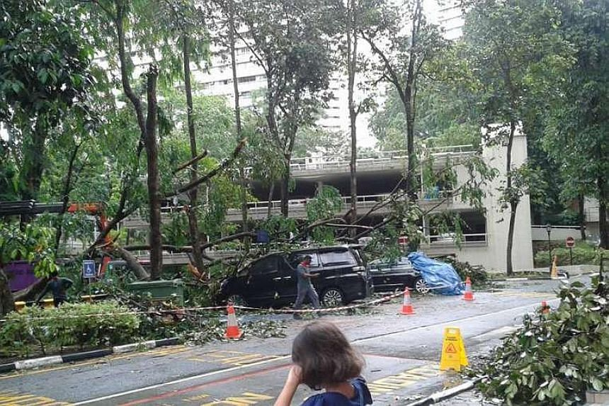 Some cars parked in the open carpark at Pandan Valley condominium on Dec 28, 2015, were damaged overnight by a fallen tree.