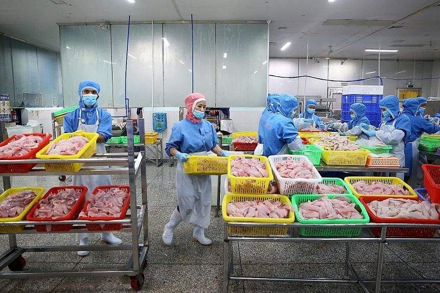 Workers processing tilapia fish fillets at a workshop in Wenchang, Hainan province. China is the main supplier of frozen tilapia to the American market, but as a result of the tariffs war between the United States and China, those exports are down th