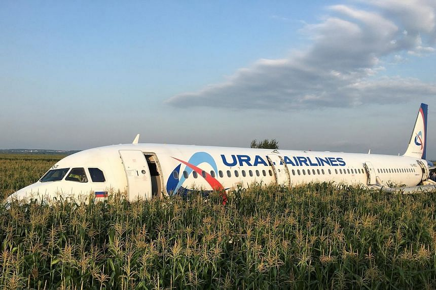 The Ural Airlines passenger plane following its emergency landing yesterday in a field near Moscow's Zhukovsky International Airport. It had collided with a flock of birds after take-off.