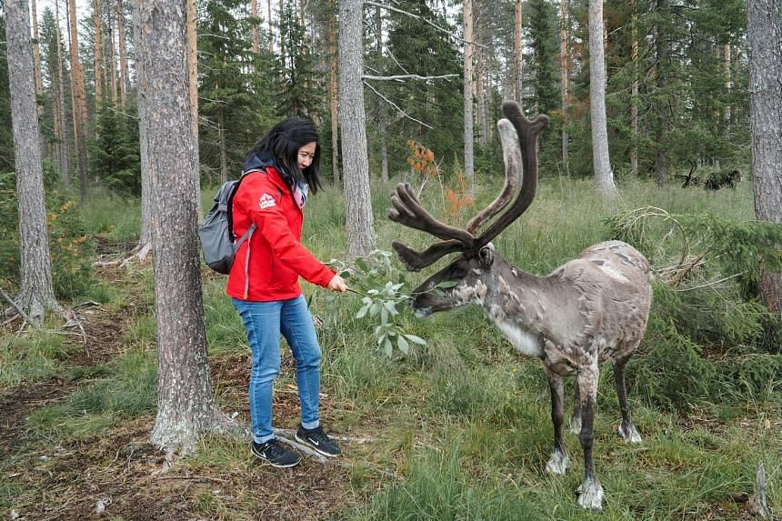 Chat with Santa at Santa Claus village, a theme park with a petting zoo. At the Santa Claus' Reindeer summer camp, about 45 adult males roam freely in a 20ha forest compound and are tame enough to come when called. Ride a husky cart through the fores