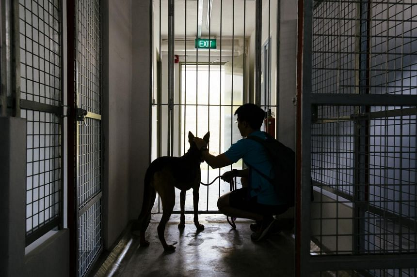 In a picture taken on June 2, 2018, a volunteer calms a dog before entering an enclosure at one of the units occupied by SOSD at The Animal Lodge.