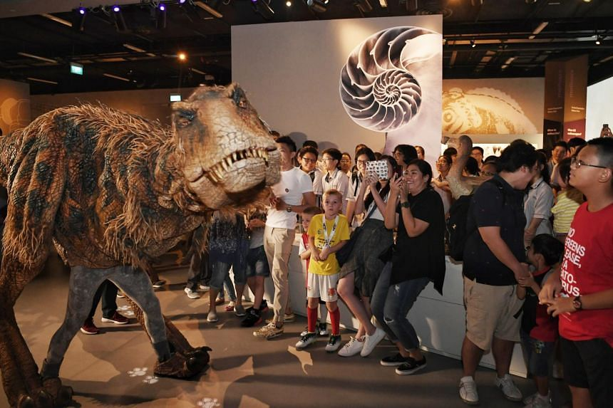 The baby T-Rex made a promotional stop at the Lee Kong Chian Natural History Museum, where three sauropod dinosaur fossils are housed, to meet visitors.