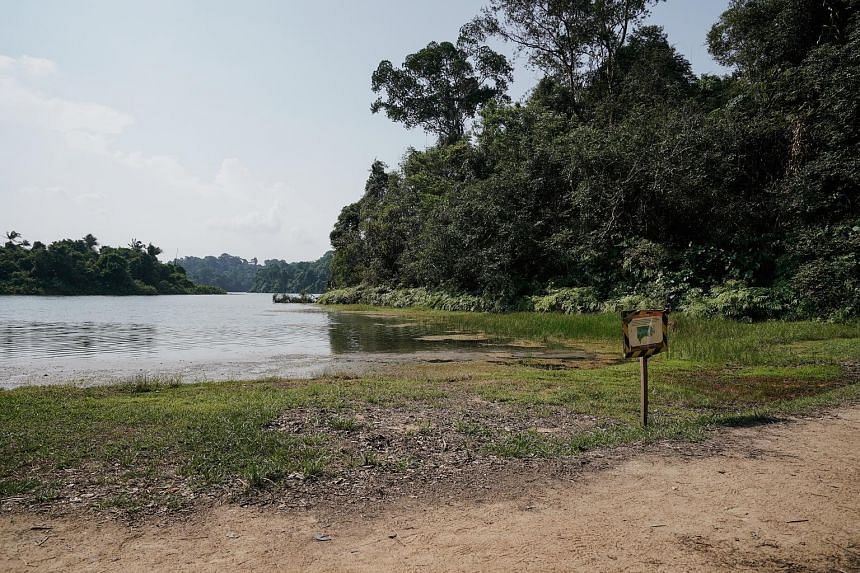 Water levels are down at MacRitchie Reservoir. Last month, the total rainfall recorded at the climate station in Changi was 92 per cent below the long-term average, breaking the record set in 1997 for the driest July in Singapore.