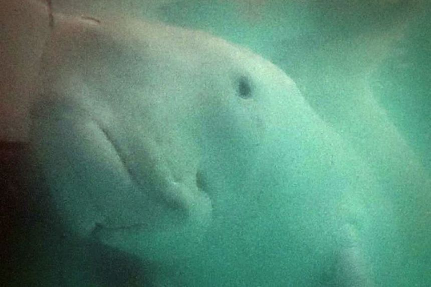 Jamil, a three-month-old male dugong, was found washed ashore in the southern province of Krabi.