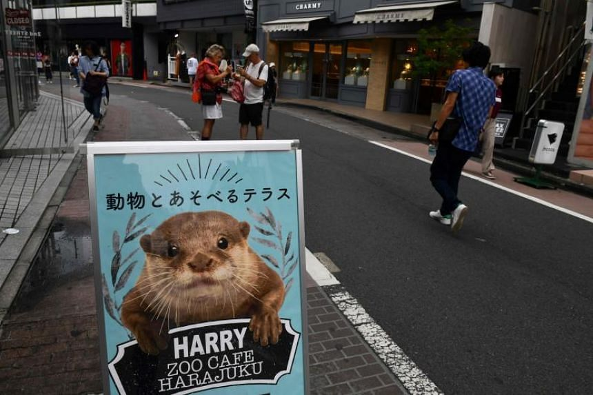 Otter cafes have sprung up in Japan offering baby otters for up to US$10,000 (S$13,871).