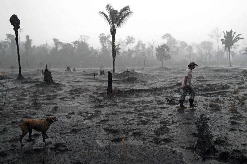 Nearly 80,000 forest fires have broken out in Brazil since the beginning of the year, with over half of them in the massive Amazon basin that regulates part of Earth's carbon cycle and climate.