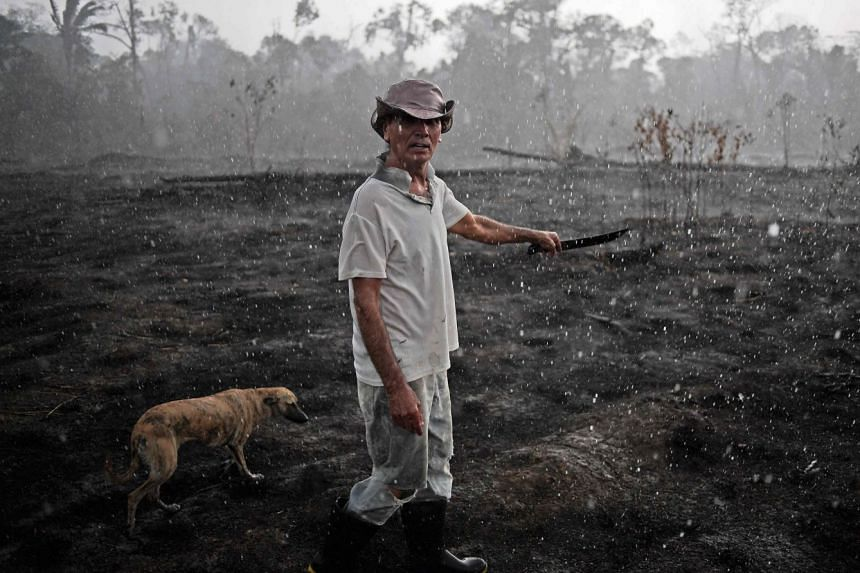 A Brazilian farmer and his dog walking through a burnt area of the Amazon rainforest. More than 82,000 forest fires have broken out in Brazil since the beginning of the year.