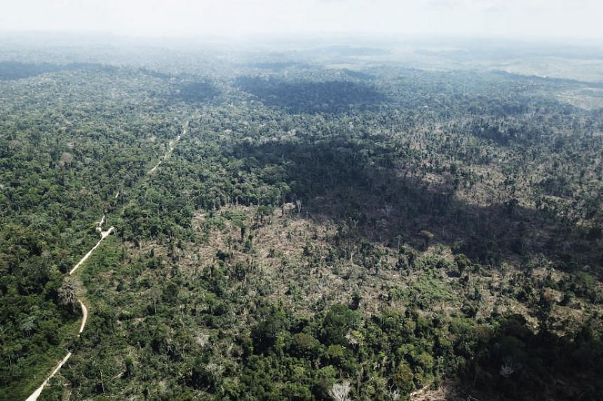 A photo taken on Aug 28 shows a burnt tract of the Amazon jungle near Altamira in Brazil's Para state.