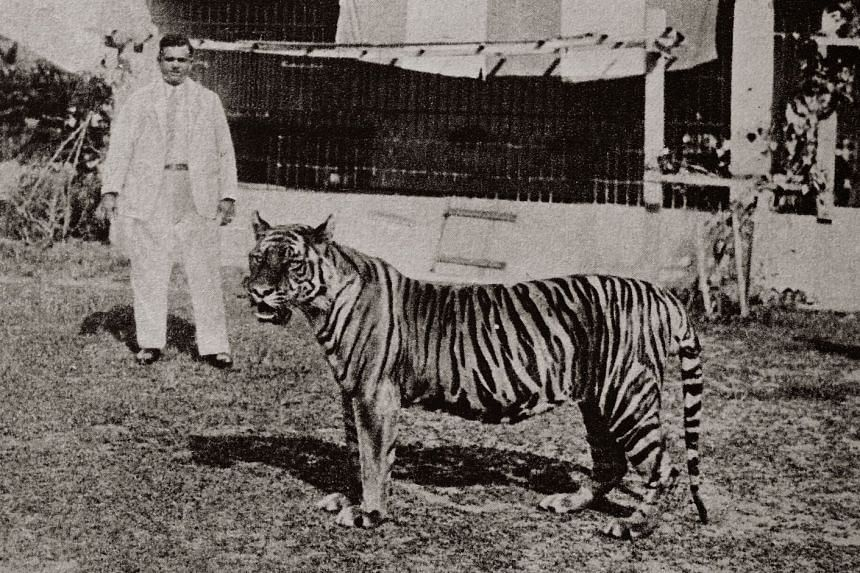 Mr W.L.S. Basapa with his pet Bengal tiger Apay, which followed him around like a dog, at the pre-war zoo in Punggol.