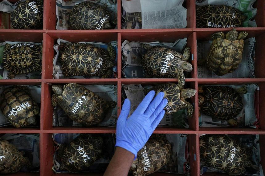 While the illegal wildlife trade exists, the majority of wildlife trade is legal.