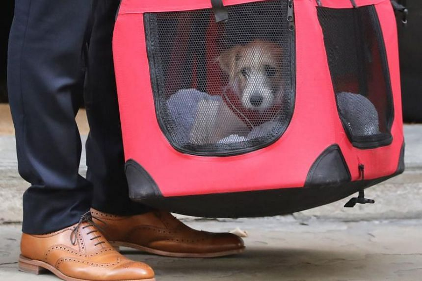 British Prime Minister Boris Johnson and his girlfriend Carrie Symonds on Sept 2 welcomed a rescue puppy, a male Jack Russell, to their Downing Street home.