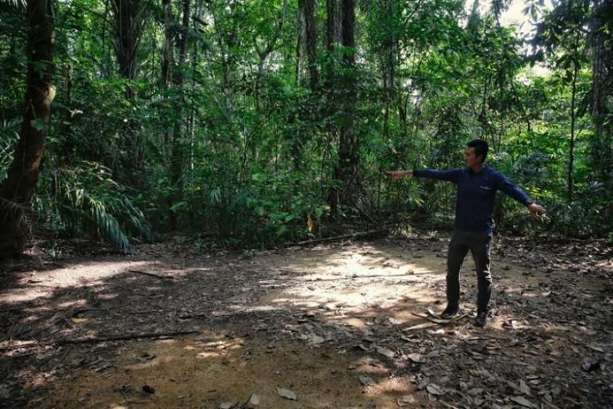 A photo taken on June 7, 2018, in which an LTA engineer shows the approximate location of a borehole during a site visit to the Central Catchment Nature Reserve after completion of investigation works for the Cross Island Line train tunnel.