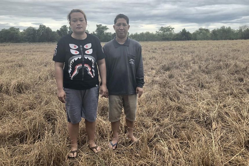 Rice farmer Arkom Pimsang and his wife Nattiya Phayrahan on their padi field. Mr Arkom has seen 2.4ha of his crop wither and another 8ha growing at a much slower rate.